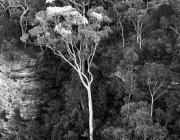 View the image: Blue Mountains, NSW, 2002