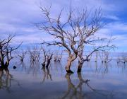 View the image: Menindee Lakes, NSW, 2001